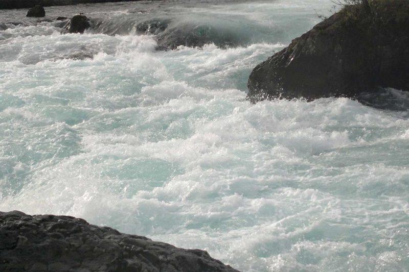 Reducción nitrógeno en piscicultura